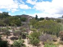 the view of the Jardín Etnobotánico de Oaxaca from Museo de las Culturas de Oaxaca, Santo Domingo